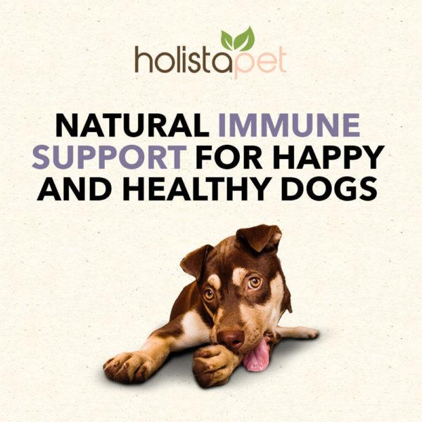 Holistapet CBD immune healthy support dogs