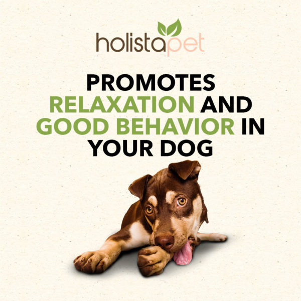 CBD Holistapet Hemp Extract helps promote relaxation and good behavior in your dog