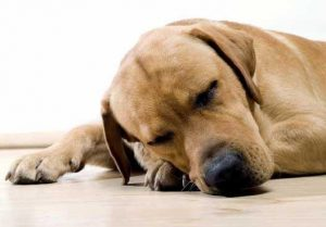 benefits of cbd oil for dogs sleep