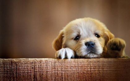 puppy separation anxiety solutions