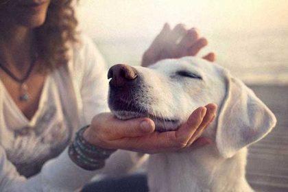 cbd-medicine-for-dogs cbd oil for animals