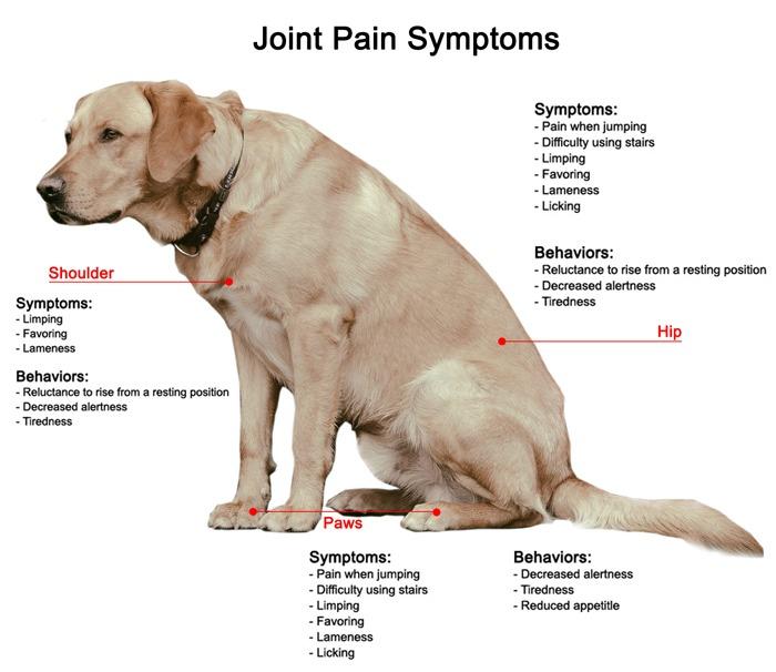 cbd-oil-for-dogs-arthritis-dog-joint-supplement