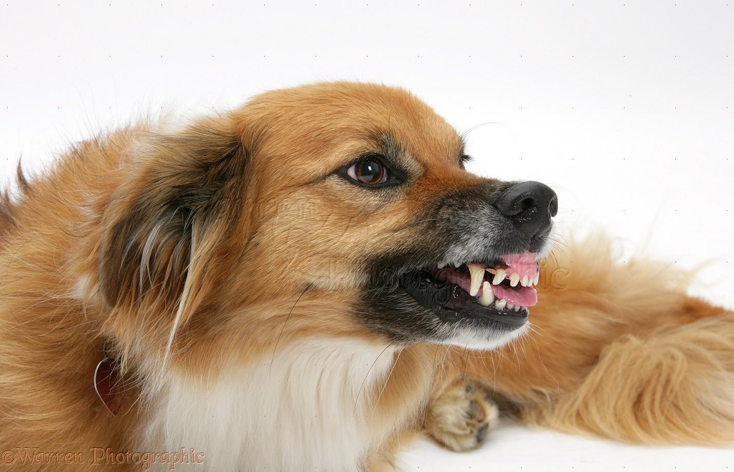 Border Collie-cross bitch cbd oil for dog aggression