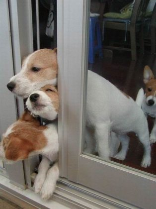 dogs squeezing out door separation anxiety