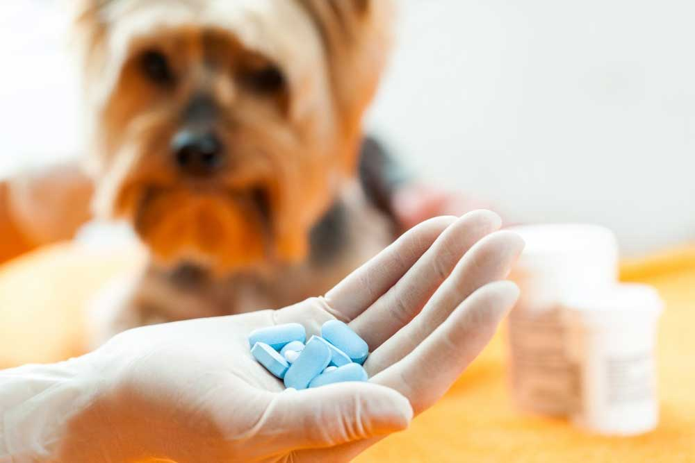 What Pills Can You Give A Dog For Pain
