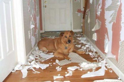Puppy Separation Anxiety Solutions Holistapet