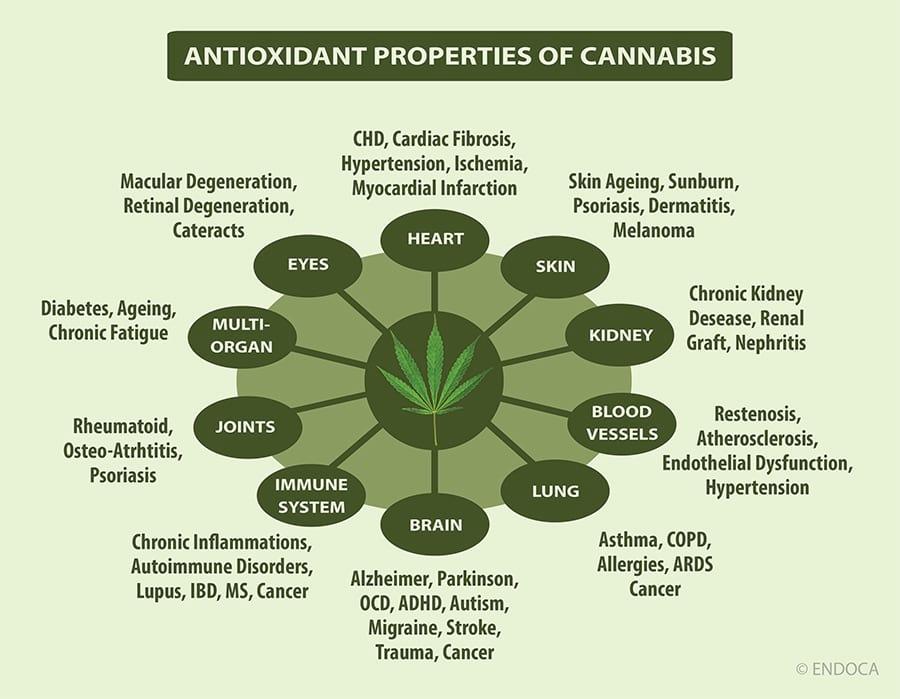 antioxidant-cbd-properties