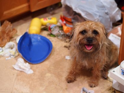how-to-deal-with-dog-anxiety-destroyed-trash