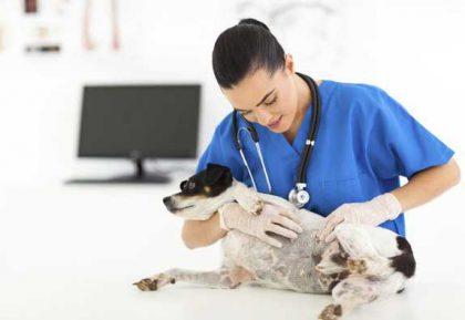 vet-checking-dog-skin-cancer