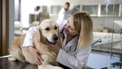 vet-dog-checkup
