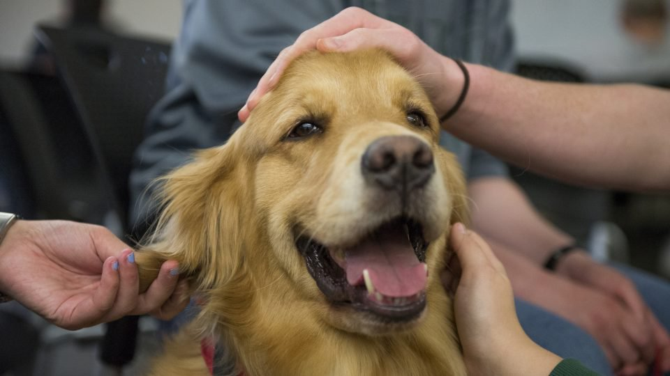 service-dog-cbd for dogs with epilepsy