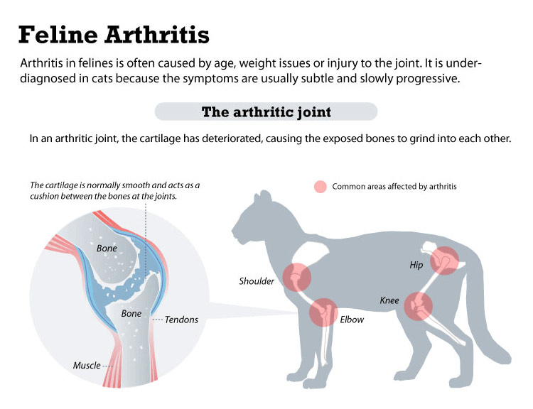 feline arthritis using cannabidiol for pain and inflammation in cats
