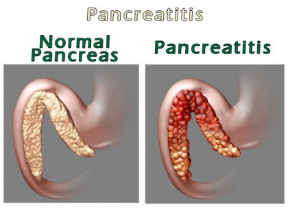pancreatitis-in-dogs-comparison