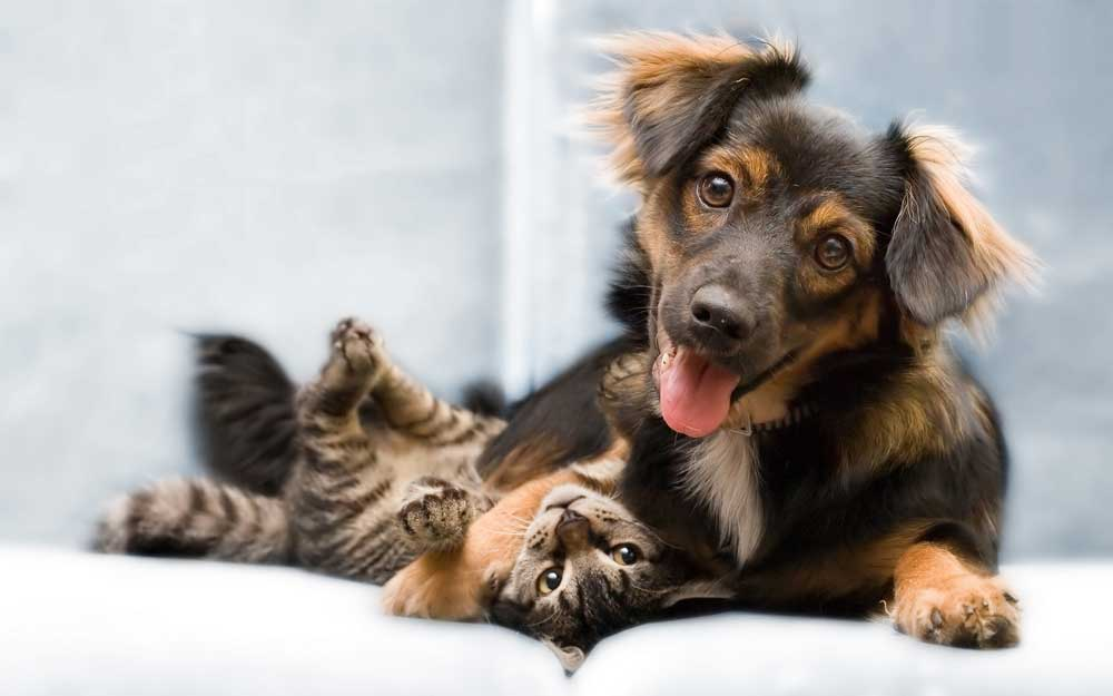cbd-side-effects-for-dogs-and-cats-cute