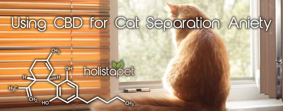 CBD for cat separation anxiety banner