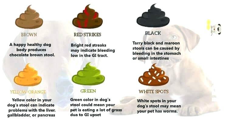 Dog stool colors cbd for dog diarrhea may help