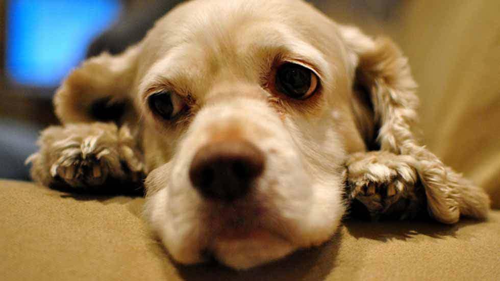 sad dog with diarrhea needs cbd