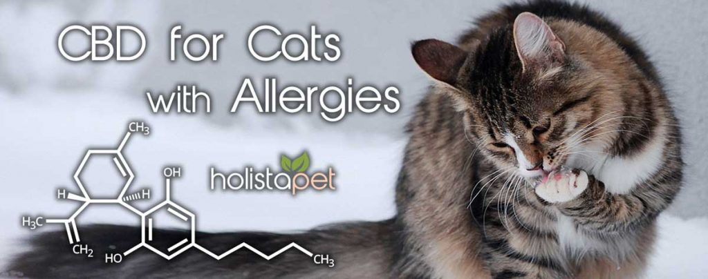 Using CBD for skin allergies in cats itchy paws