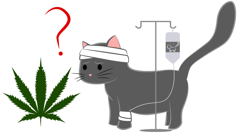 using-cbd-cannabis-for-cats-with-cancer