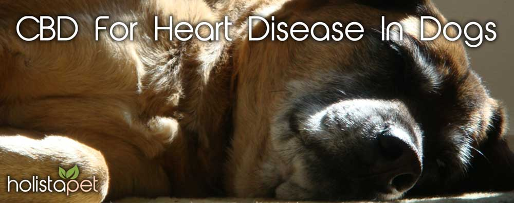 CBD-for-heart-disease-in-dogs