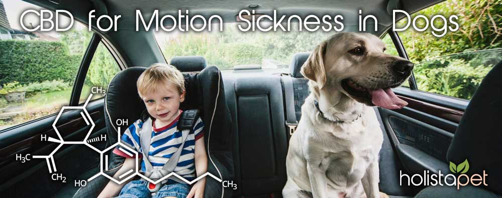 cbd for motion sickness dog car ride