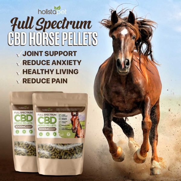 horse running in the dirt for cbd horse pellets