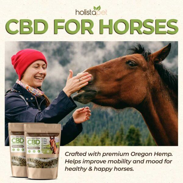 CBD horse pellets girl petting horses nose